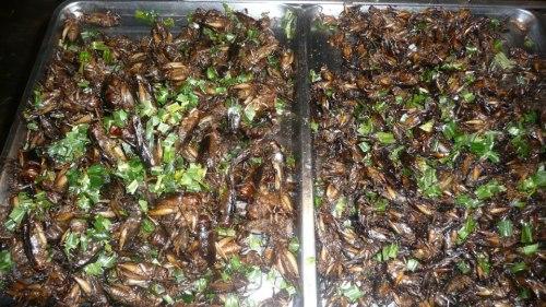 Un puesto de insectos en Tailandia